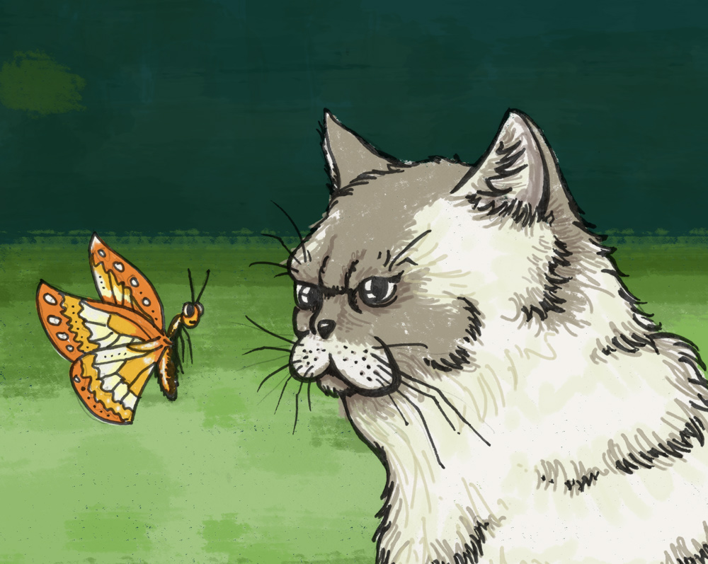 cat and butterfly illustration